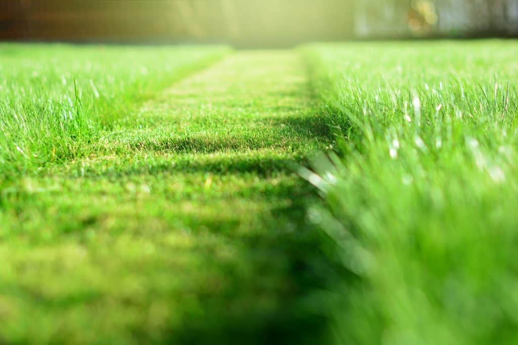 Cut strip of green grass. Mowing the lawn. Selective focus